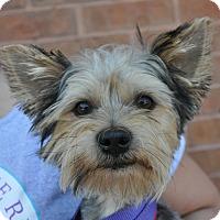 Adopt A Pet :: Caleb - Atlanta, GA