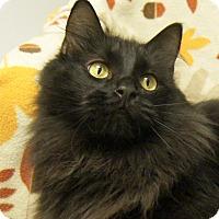 Adopt A Pet :: Inky - Colorado Springs, CO