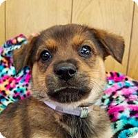 Adopt A Pet :: Arianna **FOSTER NEEDED** - New York, NY