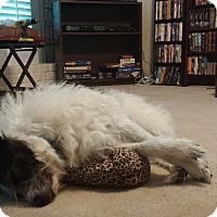 Adopt A Pet :: Bosco - Allentown, PA