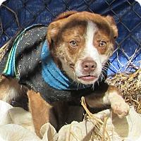 Adopt A Pet :: Grimace Gilmore - Jackson, MO