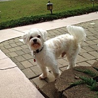Adopt A Pet :: Bobo (FL) - Gainesville, FL