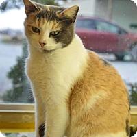 Adopt A Pet :: Zsa Zsa Gabor - Pittsburg, KS
