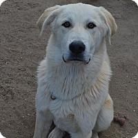 Adopt A Pet :: Cody - Peyton, CO