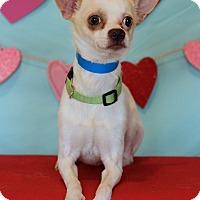 Adopt A Pet :: Little - Waldorf, MD