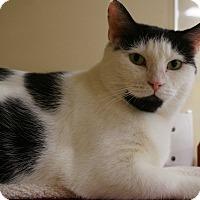 Adopt A Pet :: Cricket - Salem, NH