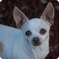 Adopt A Pet :: Chloe - Kempner, TX