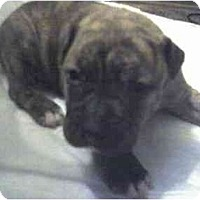 Adopt A Pet :: TANK - Fowler, CA