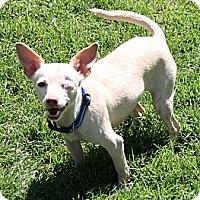 Adopt A Pet :: Sweetie - Edmonton, AB