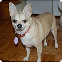 Adopt A Pet :: Evie - Rigaud, QC