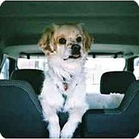 Adopt A Pet :: Zeke - Sugarland, TX