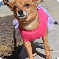 Adopt A Pet :: Shirlee - Bridgeton, MO