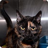 Adopt A Pet :: Dixie - Medina, OH