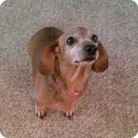 Adopt A Pet :: Zelda - Jacksonville, FL