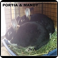 Adopt A Pet :: Portia and Mandy - Williston, FL