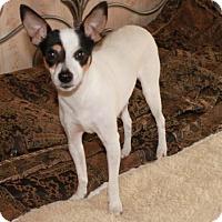 Adopt A Pet :: Becky - Foster, RI