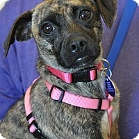 Adopt A Pet :: Willow - Atlanta, GA