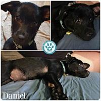 Adopt A Pet :: Daniel - Kimberton, PA