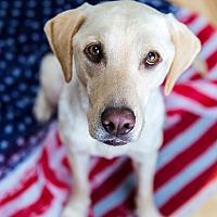 Adopt A Pet :: Bon Bon - Phoenix, AZ