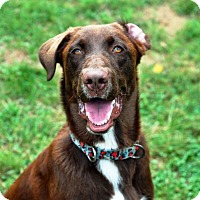 Adopt A Pet :: Paynter - Pleasant Plain, OH