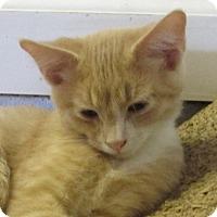 Adopt A Pet :: PERCY - Jackson, MO