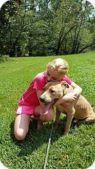 Anatolian Shepherd/Labrador Retriever Mix Dog for adoption in Forked River, New Jersey - Yukon