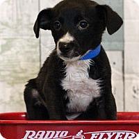 Adopt A Pet :: Carl - Waldorf, MD