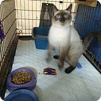 Adopt A Pet :: Leila - Avon, OH