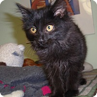 Adopt A Pet :: Trucker - Cannon Falls, MN