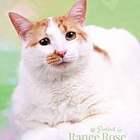 Adopt A Pet :: Oscar - Sterling Heights, MI
