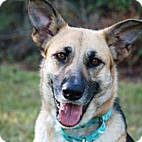 Adopt A Pet :: Sharla - Ormond Beach, FL