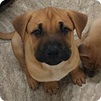 Adopt A Pet :: Bryan Adams - Snow Hill, NC