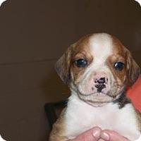 Adopt A Pet :: 34406921 - Gulfport, MS