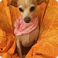 Adopt A Pet :: Marla - Tomball, TX
