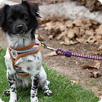 Adopt A Pet :: Dot - Monrovia, CA