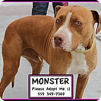 Adopt A Pet :: Monster - Fowler, CA
