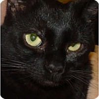 Adopt A Pet :: Houdini - Watkinsville, GA