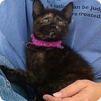 Adopt A Pet :: Tortellini - Sterling Hgts, MI