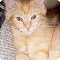 Adopt A Pet :: Fontina - Portland, OR