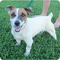 Adopt A Pet :: Jack (MD) - Hagerstown, MD