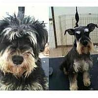 Adopt A Pet :: Maisy - Arlington, TX