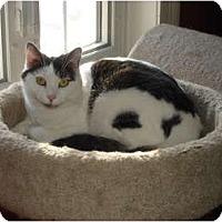 Adopt A Pet :: Cissy - Chesapeake, VA