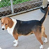 Adopt A Pet :: Josie - Grenada, MS