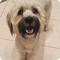 Adopt A Pet :: Mildred - Orlando, FL