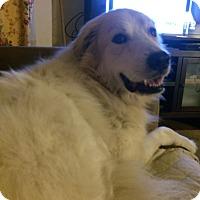 Adopt A Pet :: Oso - Lee, MA