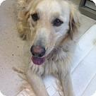 Adopt A Pet :: Francis