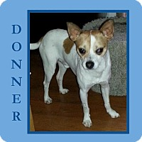 Adopt A Pet :: DONNER - Dallas, NC