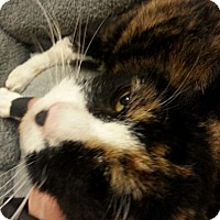 Adopt A Pet :: Patches - West Dundee, IL