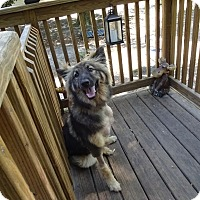 Adopt A Pet :: Champ - Green Cove Springs, FL