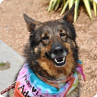 Adopt A Pet :: Gayle - Dripping Springs, TX